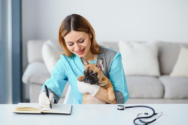 Jovem veterinário alegre cuidando e examinando um lindo cachorro bulldog francês