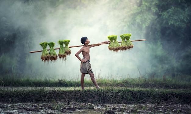 Jovens agricultores cultivam arroz na estação chuvosa.