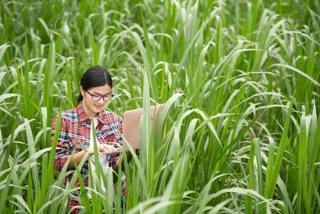 Jovens agricultores estão pesquisando plantas de milho e registrando-as em um laptop.