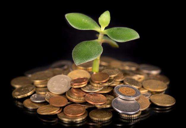 Jovens brotam de uma pilha de moedas. conceito de investimentos.