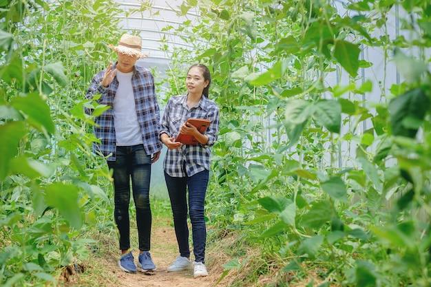 Jovens casais fazendo jardinagem, verificando a qualidade juntos na estufa de feijão comprido