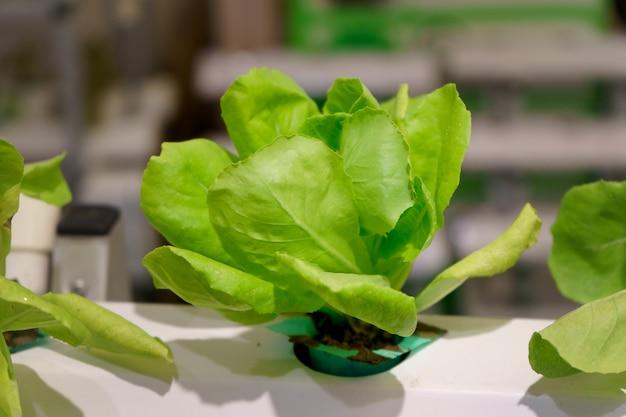 Jovens e frescos orgânicos colhidos legumes jardim hidropônico