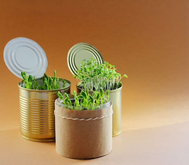 Jovens verdes saudáveis em latas de metal. . auto-suficiência em casa, processa e cultiva sua própria comida. a germinação da semente.