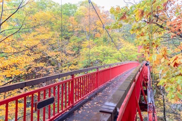 Jozankei futami suspension bridge e floresta de outono