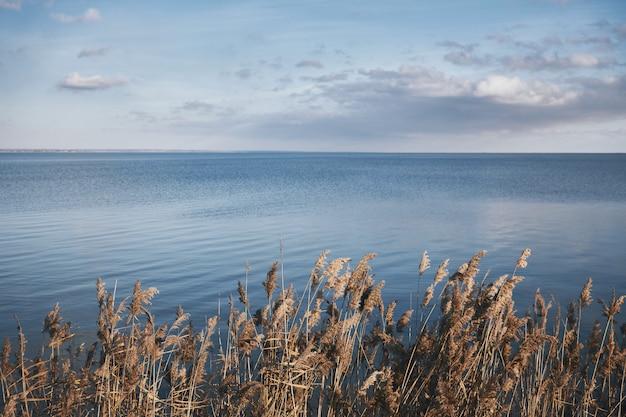 Juncos secos contra o pano de fundo de um mar azul calmo, copie o espaço
