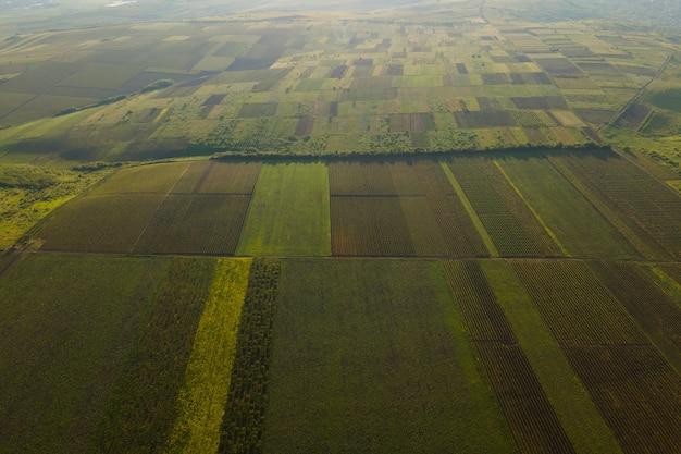 K vista aérea da bela vinícola em fileiras ao pôr do sol imagem cinematográfica drone voo acima da vinha ...