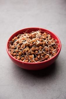 Kala chana germinada ou grão de bico preto ou marrom - é um substituto vegano para proteínas ricas e tem alto teor de enzimas vivas