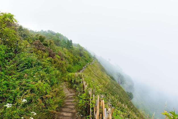 Kew mae pan nature trail trekking trilha que conduz pela selva