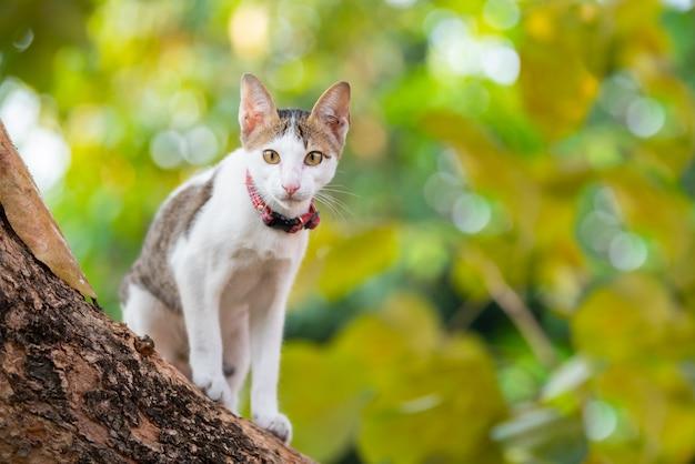 Kitten climbing tree and blur fundo verde.