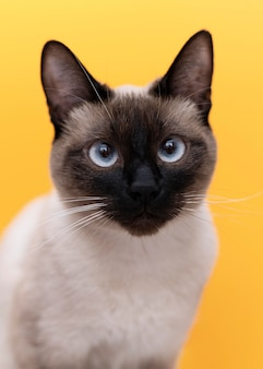 Kitty com parede monocromática atrás dela