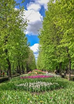 Kropyvnytskyi, ucrânia 09.05.2021. becos de tulipas no arboreto kropyvnytskyi em um dia ensolarado de primavera