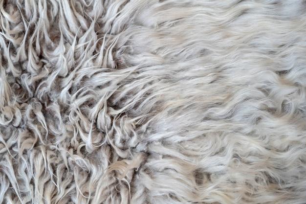 Lã de pêlos de animais com pincel e pente. penteado e não. o processo de pentear o cabelo com pente e pincel especiais, com espaço de texto livre