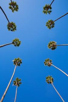 La los angeles palmeiras em uma linha típica da califórnia
