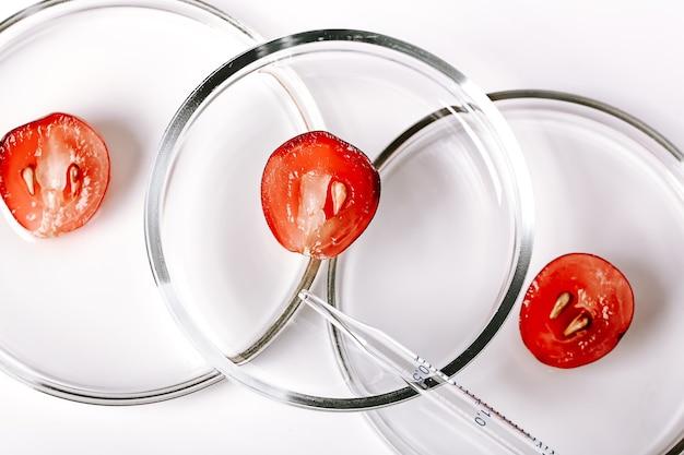 Laboratório de cosmética abstrato. cosméticos orgânicos à base de produtos naturais de óleo de uva. uvas em placas de petri em um fundo branco. copiar espaço, disposição plana, vista de cima.