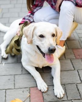 Labrador adorável com proprietário