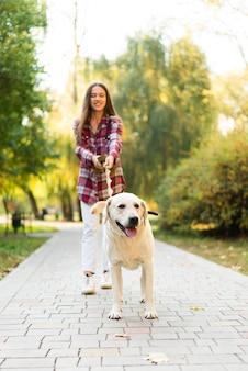 Labrador adorável fora para uma caminhada