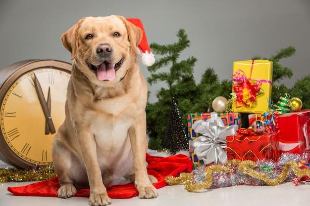 Labrador com chapéu de papai noel. guirlanda de ano novo