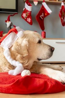 Labrador em casa usando chapéu de papai noel