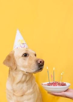 Labrador em um fundo amarelo com uma tigela de carne e velas