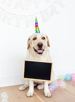 Labrador retriever bonito com um chapéu de unicórnio