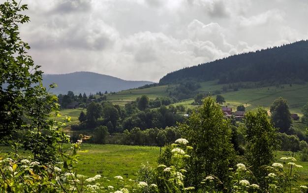 Lado ucraniano do país - montanha dos cárpatos no verão