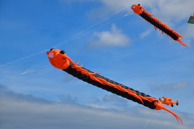 Lagarta voadora de pipas voando contra o céu na praia do oceano atlântico