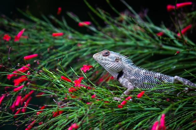 Lagarto de jardim ou também conhecido como lagarto de planta oriental no galho de uma planta
