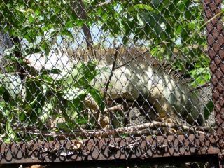 Lagarto no jardim zoológico surabaya, plantas