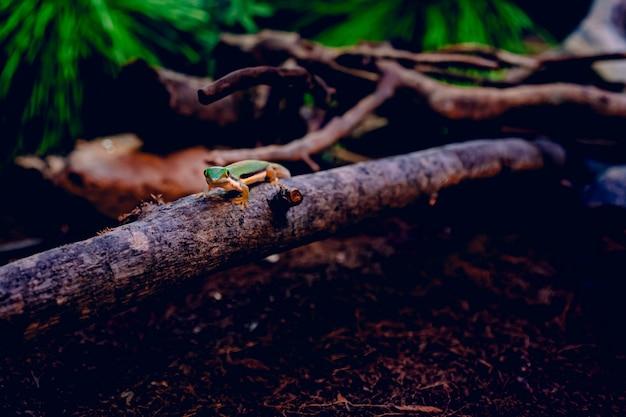 Lagarto verde andando em um pedaço de madeira sobre folhas secas marrons cercado por galhos de árvores