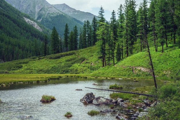 Lago alpino e floresta de coníferas no vale da montanha