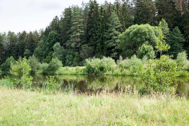 Lago antigo com nenúfares em crescimento e outra vegetação, o verão no lago com água parada e nenúfares