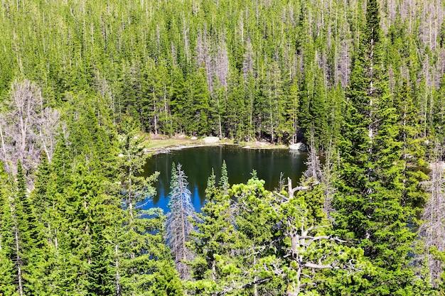 Lago cercado por uma floresta de pinheiros perenes