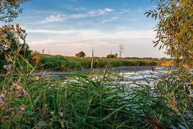 Lago coberto no meio de árvores verdes ao pôr do sol. paisagem rural
