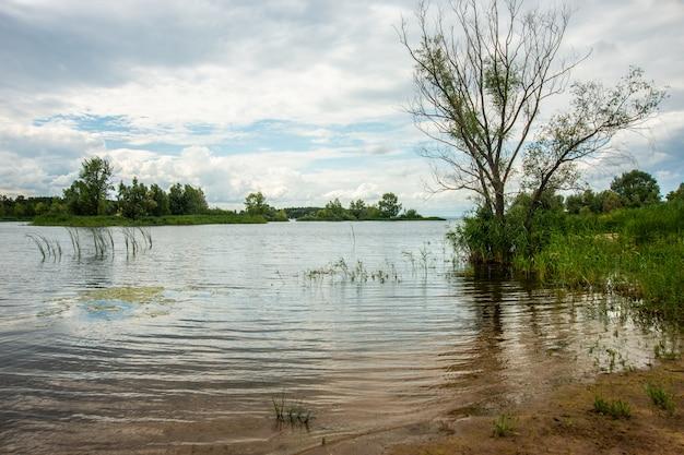 Lago com cana, local de pesca, paisagem natural