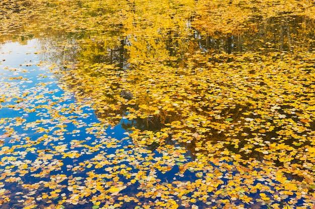 Lago com folhas amarelas caindo. bela floresta de outono