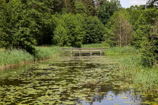Lago com nenúfares em crescimento