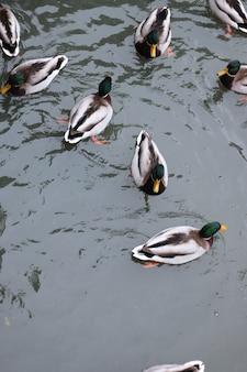 Lago com patos no winter park