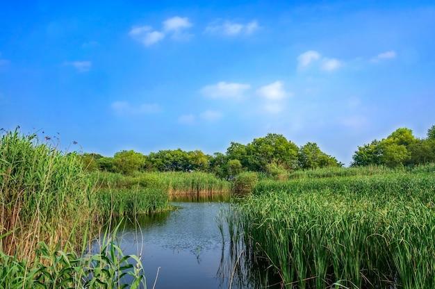 Lago com plantas