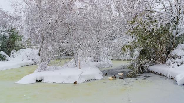 Lago congelado e coberto de neve em um parque em madrid. espanha