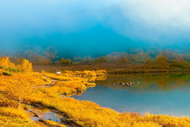 Lago da bela floresta no dia de outono.