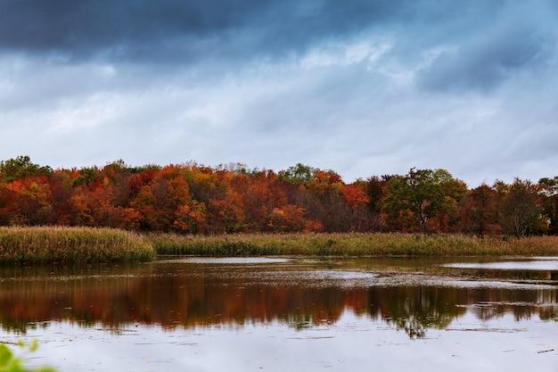 Lago da floresta com água fria desobstruída.