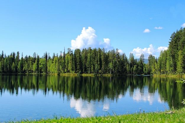 Lago da floresta com reflexo das árvores e nuvens na água