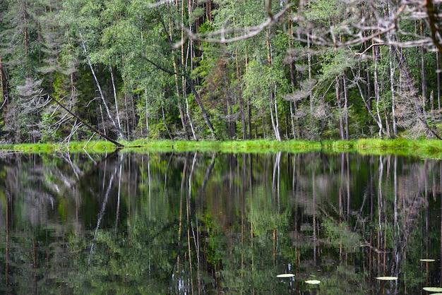 Lago da floresta em um parque natural no verão