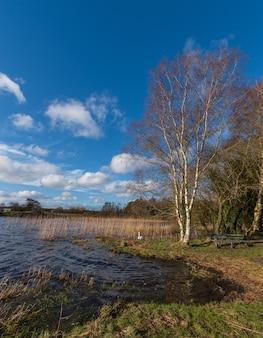 Lago da floresta no dia ensolarado de outono, um cisne branco selvagem caminha, paisagem da floresta