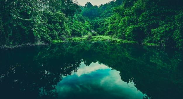 Lago de água da floresta tropical