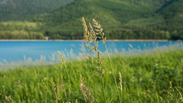 Lago de água sereno paisagem de campo de grama verde com fundo de vista para a montanha