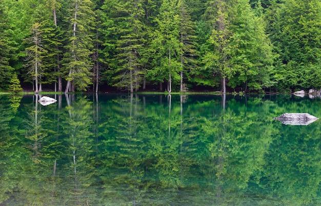 Lago de floresta de montanha pequena em franch alps (manhã nublada de verão).