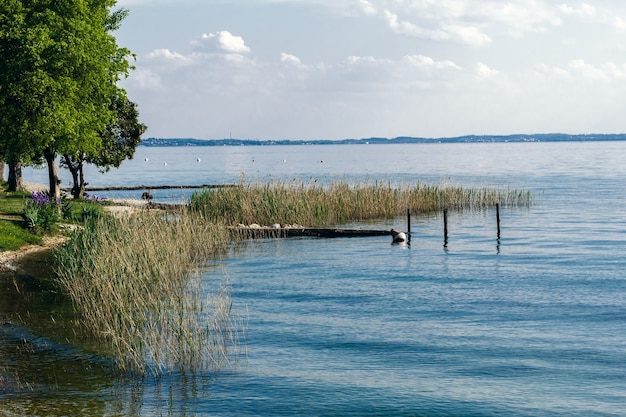Lago de garda com a típica vegetação aquática.