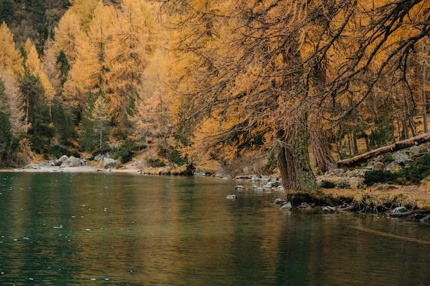Lago de montanha calmo e pinheiros coloridos outonais ao longo de uma costa rochosa