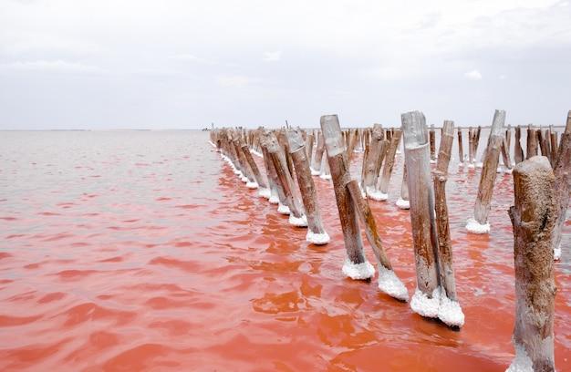 Lago de sal-de-rosa na crimeia. sal nos troncos.